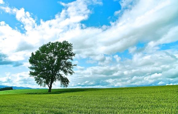 是誰推倒了哲學之木?